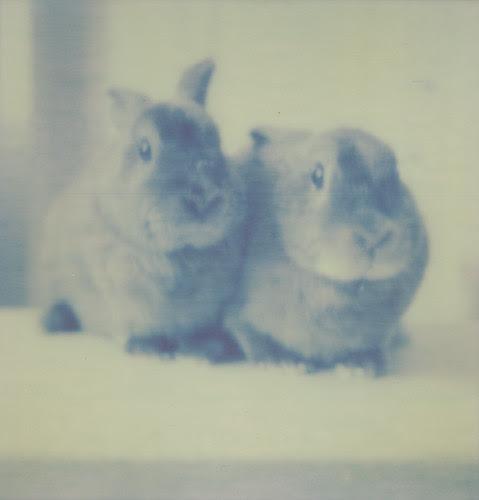my babies! franny & zooey