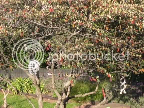 Barbecue Tree