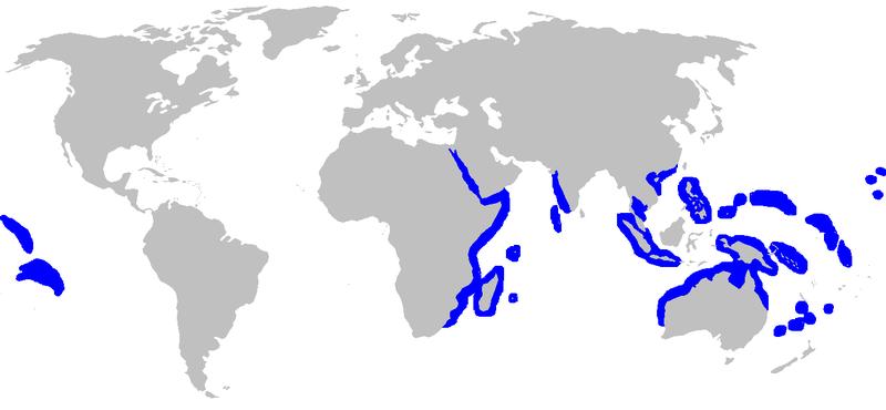 http://upload.wikimedia.org/wikipedia/commons/thumb/7/76/Carcharhinus_amblyrhynchos_rangemap.png/800px-Carcharhinus_amblyrhynchos_rangemap.png