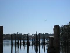 Pelican on a pole.