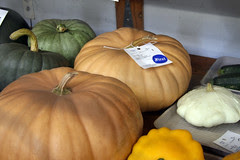 Long Island Cheese pumpkins at the Fair