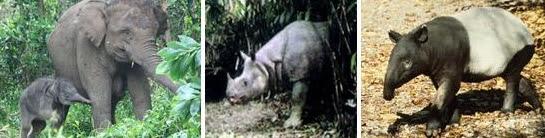 Gajah - Badak - Tapir