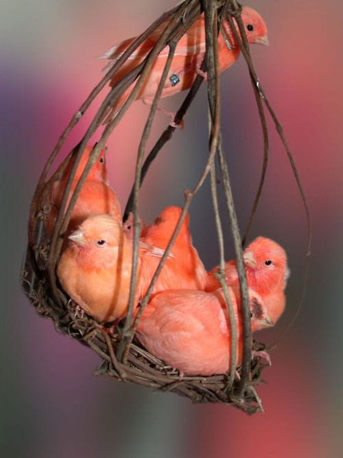 coral birds. so sweet!