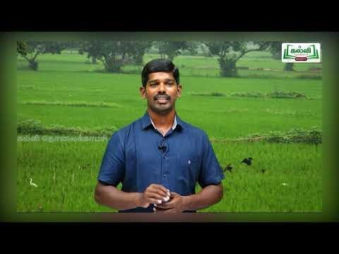 4th Social science  ஐவகை நில அமைப்பு  அலகு 2  பகுதி 4  Kalvi TV