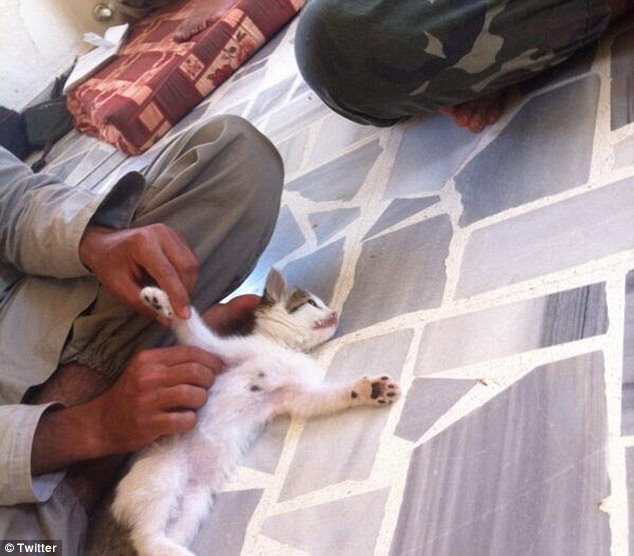 The UN study found a new breed of terrorist was being attracted by the extremist group's 'cosmopolitan' use of social media, pointing to exampleswhen jihadists posted 'kitten photographs' on Twitter