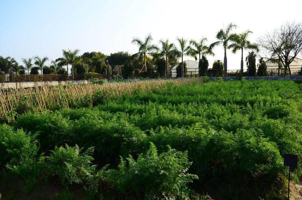 Vegetable Seed Planting Chart India List Of Winter Summer Seasonal Vegetables
