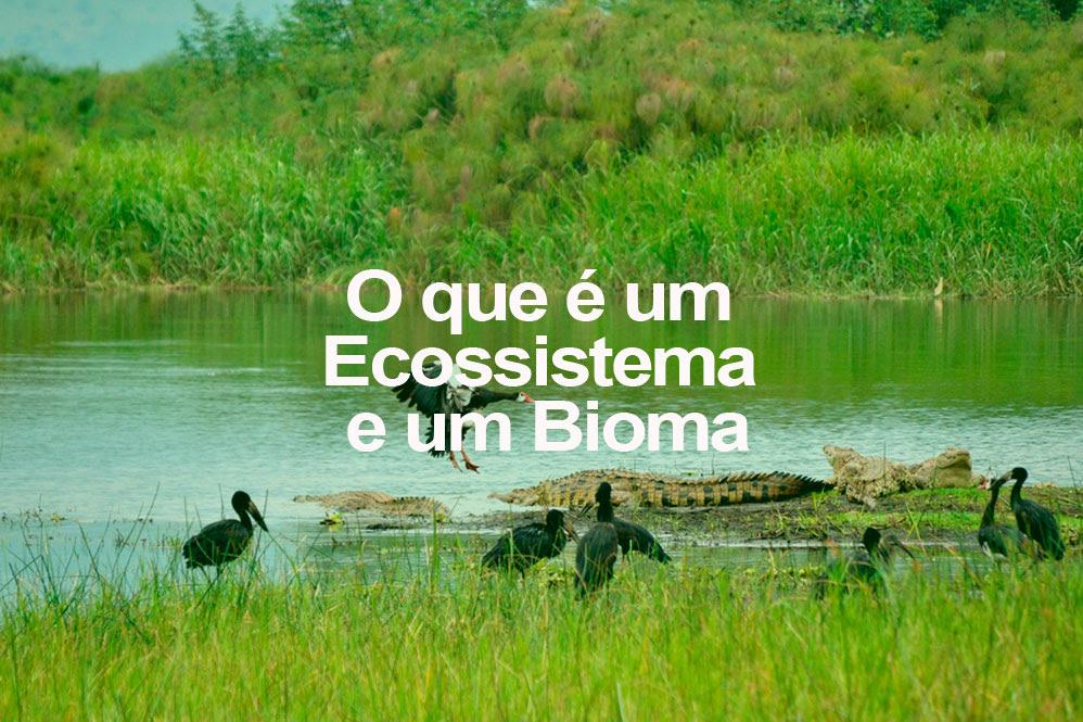 o-q-e-ecossistema