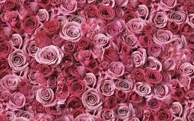roses.imagesCAH75M9S