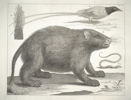 mammal and bird drawings
