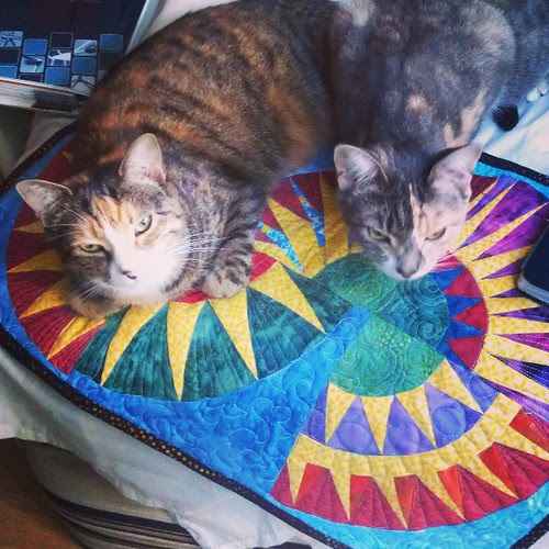 But you made this for us to sit on, Mummy! And it is sooo comfy! #cats #quilting #funny