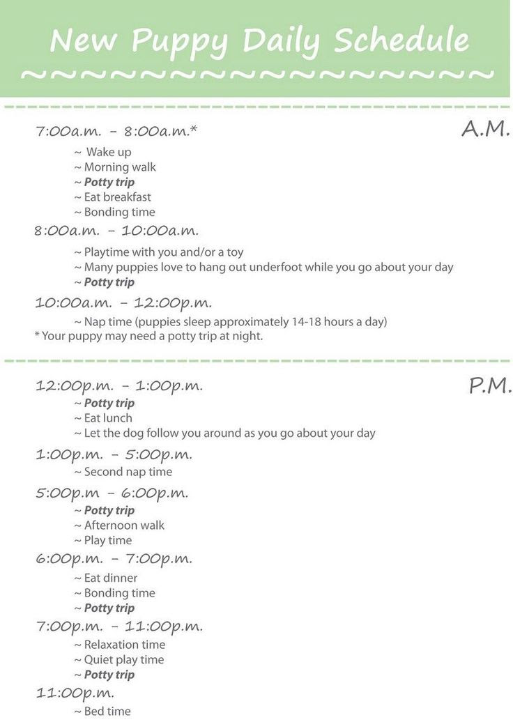 1000+ ideas about Puppy Schedule on Pinterest | Puppy care, Potty ...