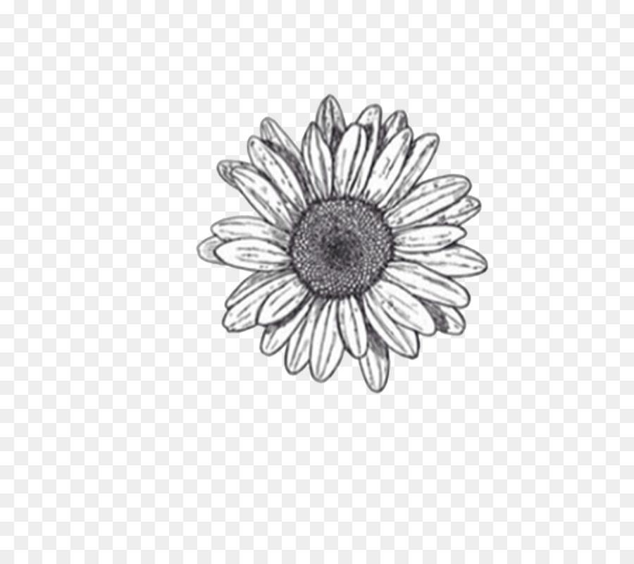 Aesthetic Minimalist Simple Flower Drawing Largest Wallpaper Portal