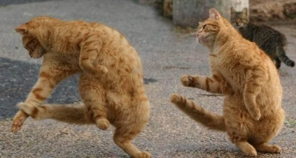 Synchronous cats