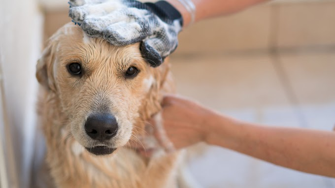 TREND ESSENCE: How to groom your pet at home, according to an expert