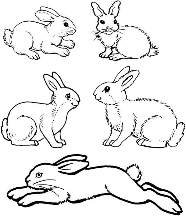 128 Dibujos De Conejos Para Colorear Oh Kids Page 14