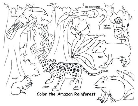 animal habitat coloring pages coloring pages  kids