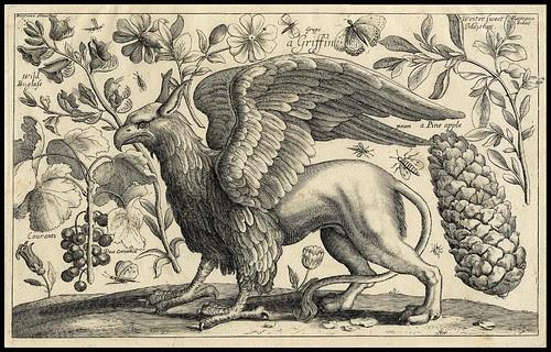 Animalium, ferarum et bestiarum - Griffin -1663