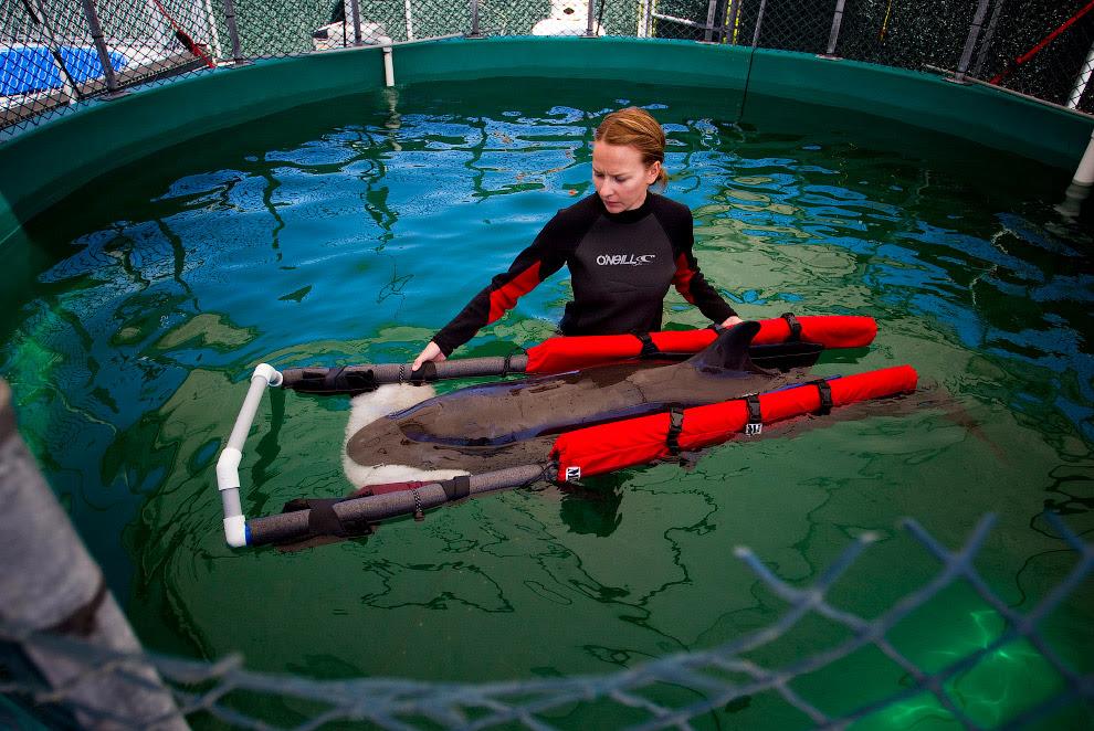 Центр для ссавців у Ванкувері, Британська Колумбія