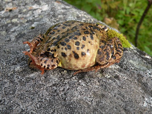 bigfrog2