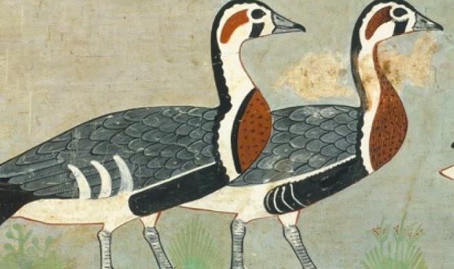 На древнеегипетских фресках возрастом 4600 лет обнаружили вымерший вид гусей