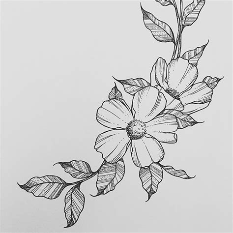 wild flower wednesdays   beautiful flower drawings