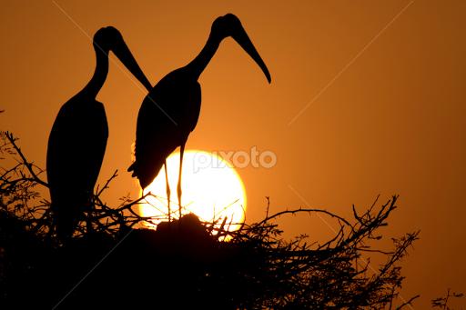 Good Evening Birds Animals Pixoto