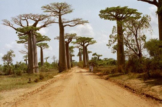 perierga.gr - Το ανάποδο δέντρο