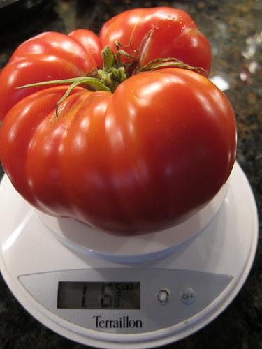 1 pound 6 5/8 ounces!