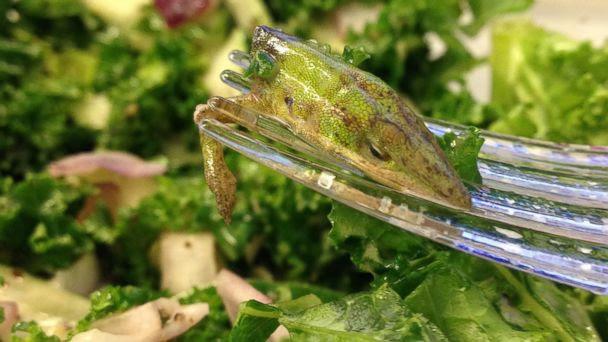 ht leaf lizard salad kb 140312 16x9 608 Woman Finds Lizard Head, Arm in Kale Salad