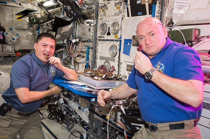 NASA astronauts Scott Kelly and Kjell Lindgren take a bite of plants harvested for the VEG-01 investigation.
