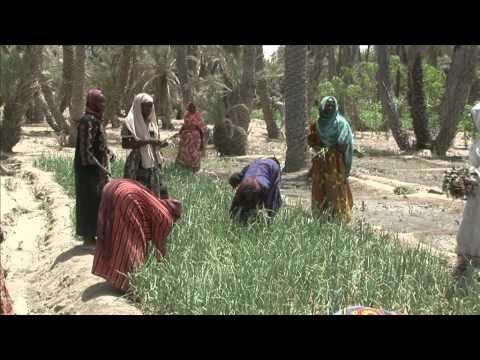Crise alimentar pode por em risco a vida de mais de 18 milhões de pessoas no Sahel