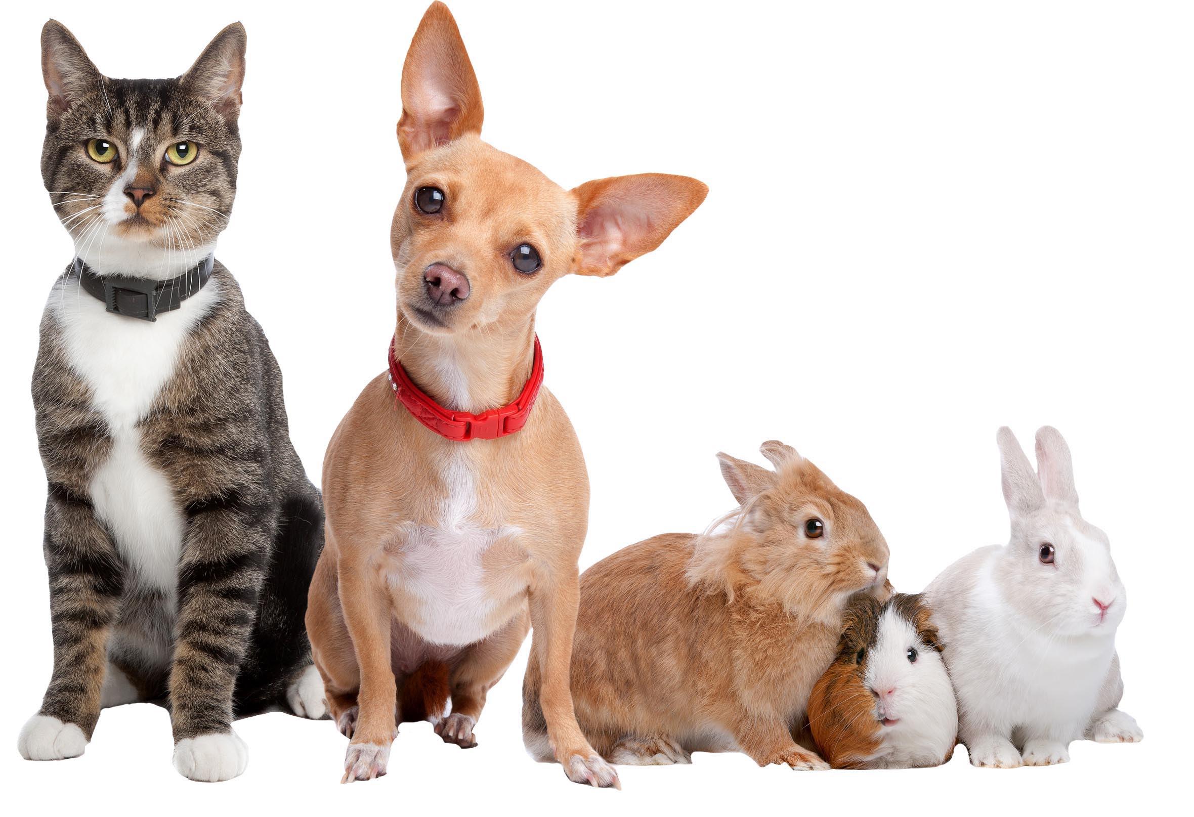 Pet Resources: American Animal Hospital Neenah Wisconsin  American Animal Hospital