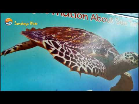 Ahungalla sea turtle conservation center