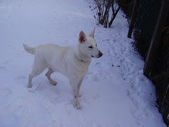 tala cody backyard snow 015