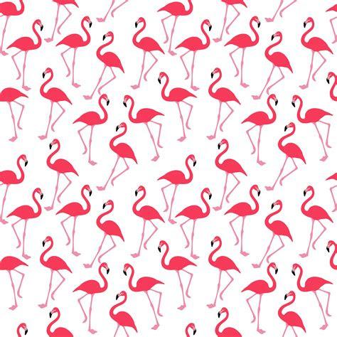 flamingo wallpaper background  stock photo public