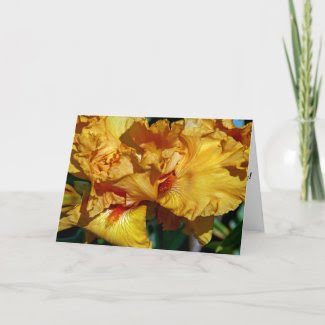 Peachy Petals Greeting Card