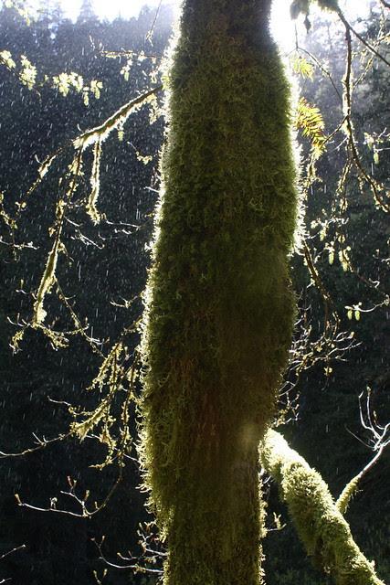 rainstorm, wahclella falls trail