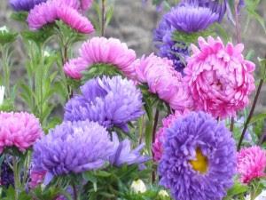 Flores Rosas Pequenas Fondo De Pantalla