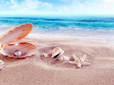 sea shells  beads sandy beach hd wallpapers