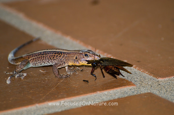Lizard Cleaning our Cabina