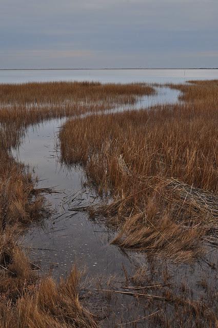Metompkin Marsh (4)