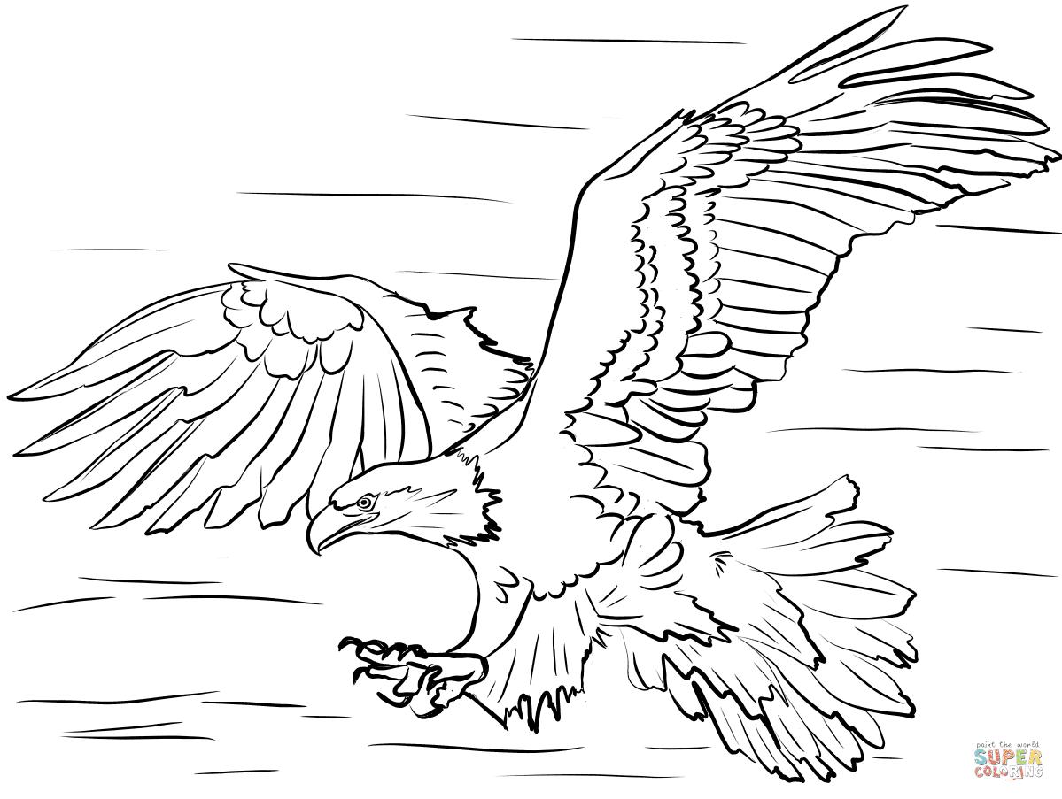 Disegno Di Aquila Calva A Caccia Di Prede Da Colorare Disegni Da