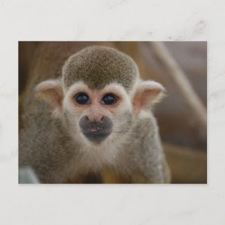 Spider monkey postcard