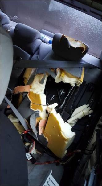 Μια πεινασμένη αρκούδα μπορεί να κάνει ένα αυτοκίνητο κομμάτια (3)
