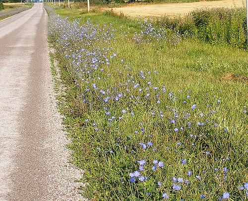 A Path of Blue