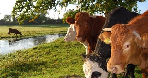 Newlyn farm