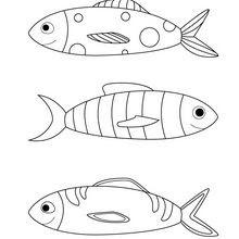 Dibujos Para Colorear Peces Para Hacer Bromas Eshellokidscom