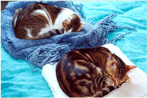 2 Sleep cats