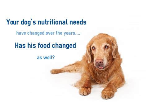 top   senior dog foods