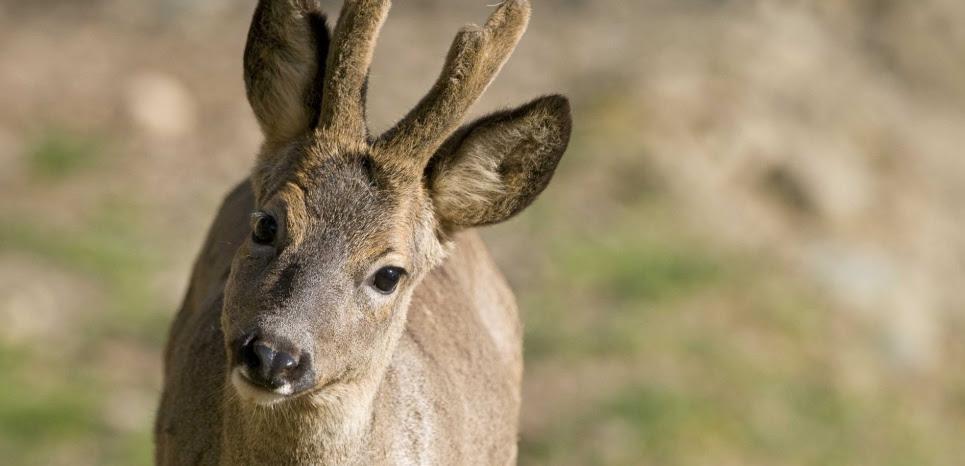 """La """"police"""" de la biodiversité chargée de sanctionner les délits de chasse est mal organisée et dotée de peu de moyens, malgré la nouvelle loi. ©AUSLOOS/SIPA"""